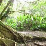 Im Wald am Ufer des Amazonas in Kolumbien bei Leticia